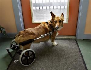 puppychair2.jpg