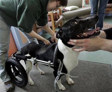 puppychair3.jpg